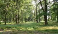 Szymanow_-_park_placowy_.jpg