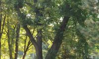 Witoszow_Gorny_-_park_dworski_-_2.jpg